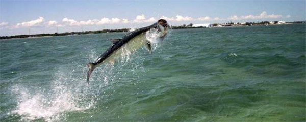 Southwest Florida Fishing Boating Information Fort Myers Real Estate
